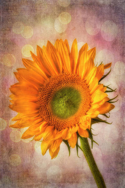 Wall Art - Photograph - Bokeh Sunflower by Garry Gay