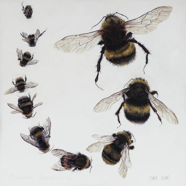Wall Art - Painting - Bombus by Odile Kidd