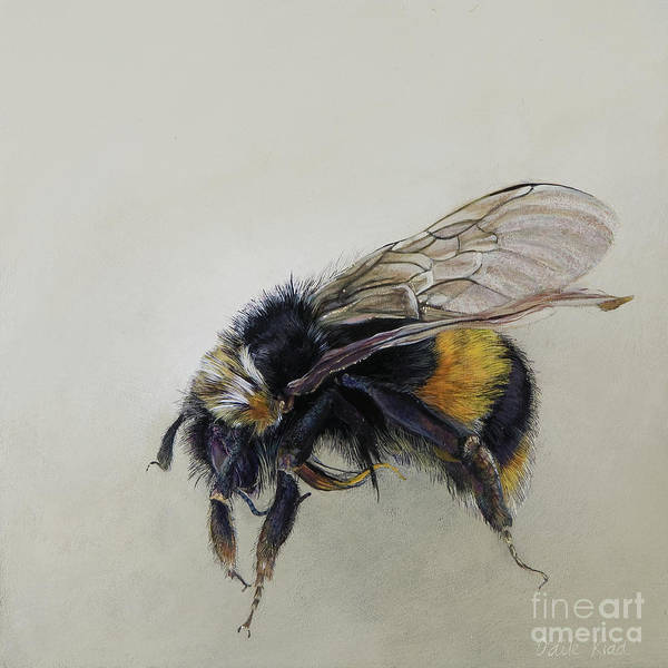 Wall Art - Painting - Bombus Terrestris One A by Odile Kidd