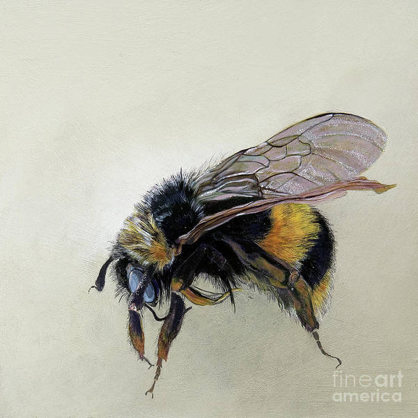 Wall Art - Painting - Bombus Terrestris One B by Odile Kidd