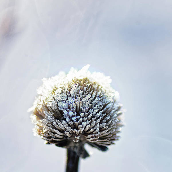 Frosty Photograph - Bone Chillin by Susan Capuano
