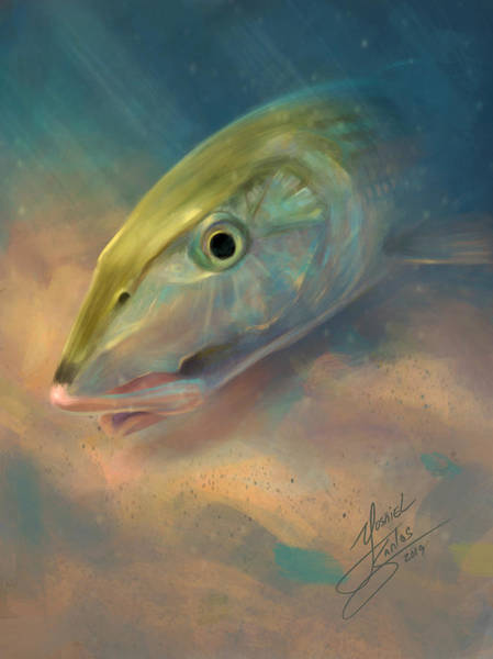 Wall Art - Digital Art - Bonefish Portrait by Yusniel Santos