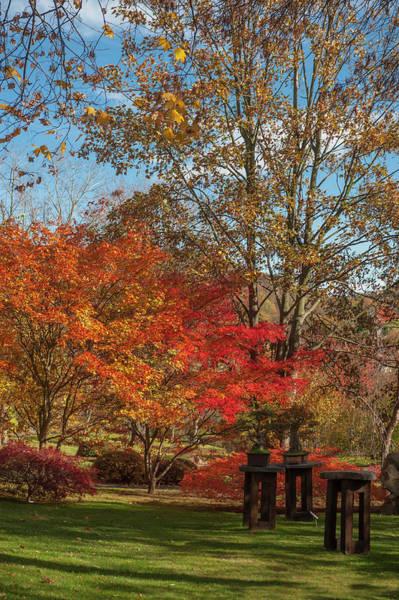 Photograph - Bonsai Collection In Autumn Japanese Garden 1 by Jenny Rainbow