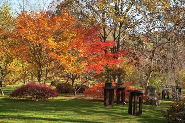 Photograph - Bonsai Collection In Autumn Japanese Garden 2 by Jenny Rainbow