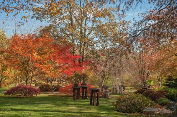 Photograph - Bonsai Collection In Autumn Japanese Garden by Jenny Rainbow