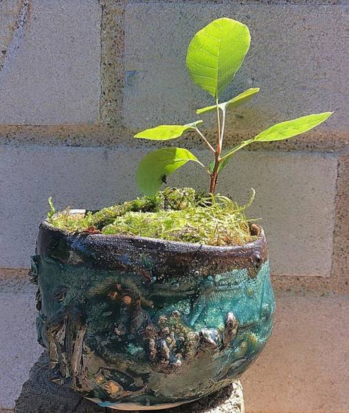 Mixed Media - Bonsai On A Coral Reef by Mario MJ Perron
