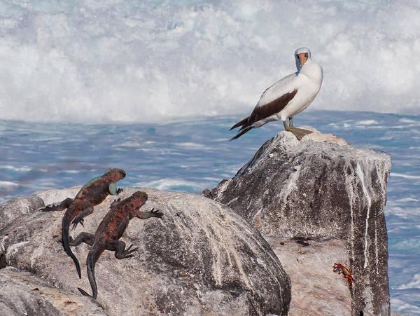 Wall Art - Photograph - Booby, Iguanas And Crab, Galapagos by Michael Lustbader
