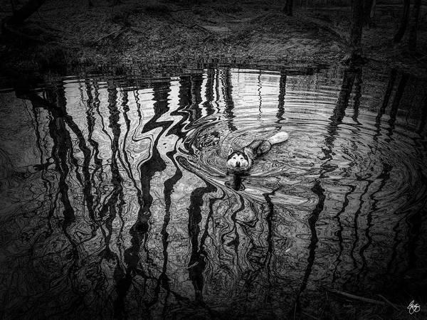 Photograph - Boofs Swim by Wayne King
