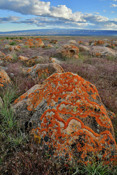 Photograph - Book Cliffs Boulder And Lichens by Ray Mathis