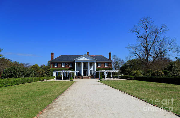 Photograph - Boone Hall Plantation In Mount Pleasant South Carolina by Jill Lang
