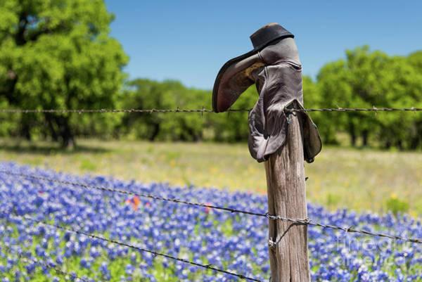 Texas Bluebonnet Photograph - Boots And Bluebonnets by Paul Quinn