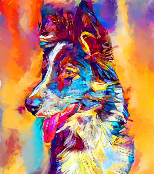 Wall Art - Painting - Border Collie 3 by Chris Butler