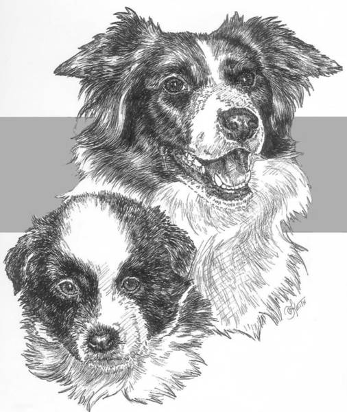 Drawing - Border Collie And Pup by Barbara Keith