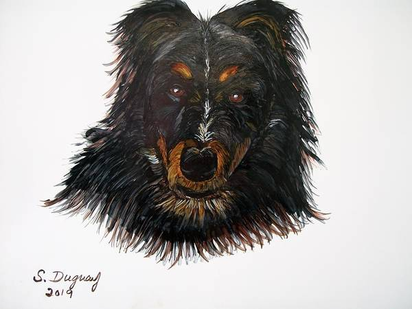 Drawing - Border Collie Cross  by Sharon Duguay