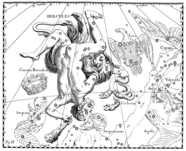 Wall Art - Drawing - Boreal Constellations Of Hercules And Cerberus by Johann Hevelius