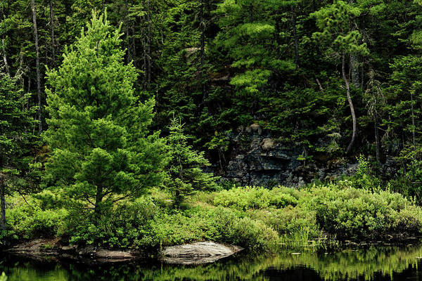 Boreal Forest Photograph - Boreal Forest by Mmeemil