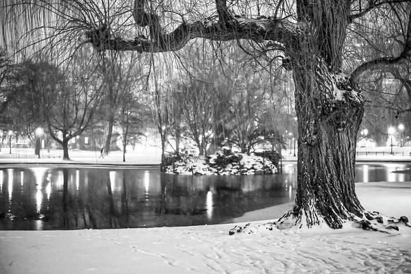 Photograph - Boston Public Garden Snow Storm Ma Massachusetts Willow Tree Black And White by Toby McGuire