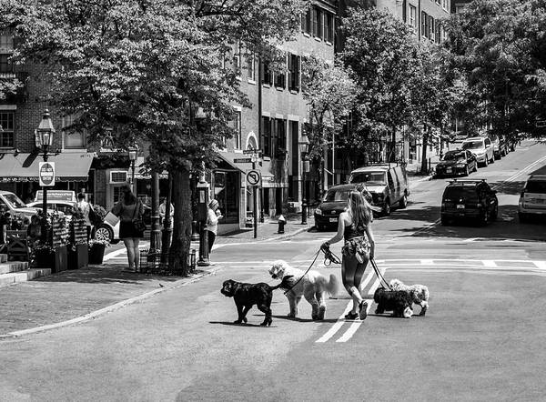 Photograph - Girl Walking Dogs - Boston Series 5268 by Carlos Diaz