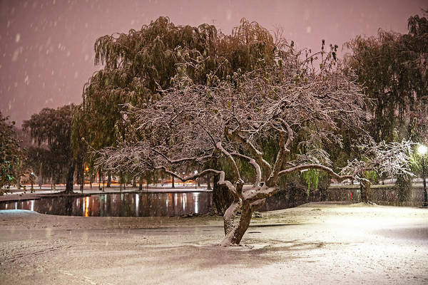 Photograph - Boston Snowfall In The Boston Public Garden Boston Ma Tree by Toby McGuire