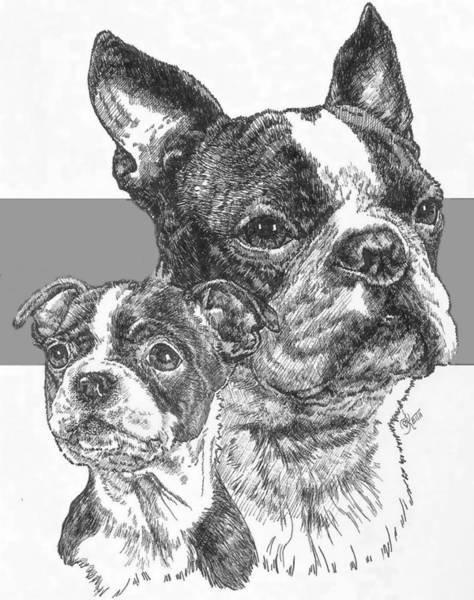 Drawing - Boston Terrier And Pup by Barbara Keith