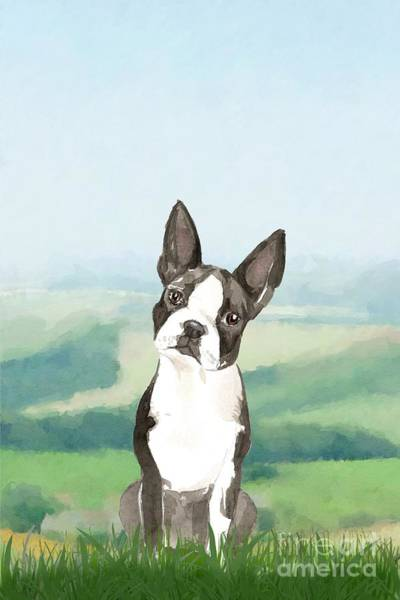 Pedigree Painting - Boston Terrier by John Edwards