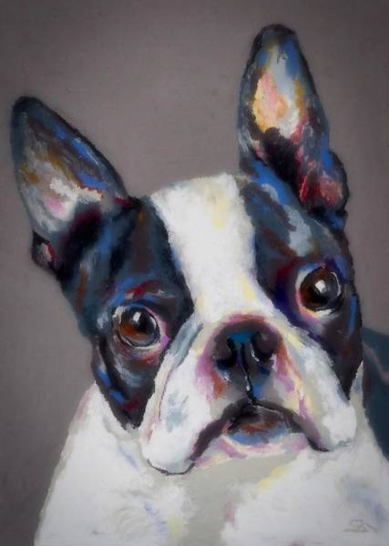 Wall Art - Photograph - Boston Terrier by Stephen Anderson