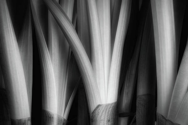 W Photograph - Botanical Abstract by Tom Mc Nemar