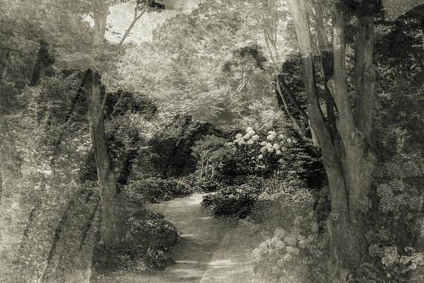 Wall Art - Photograph - Botanical Gardens Double Exposure by Joshua Small
