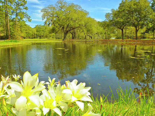 Photograph - Botanical Gardens Pond by Bill Barber