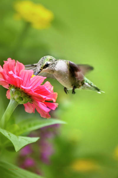 Beautiful Hummingbird Photograph - Botanical Hummingbird by Christina Rollo
