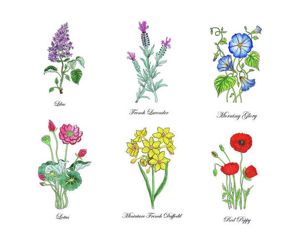 Wall Art - Painting - Botanical Watercolor Flowers Collection I by Irina Sztukowski
