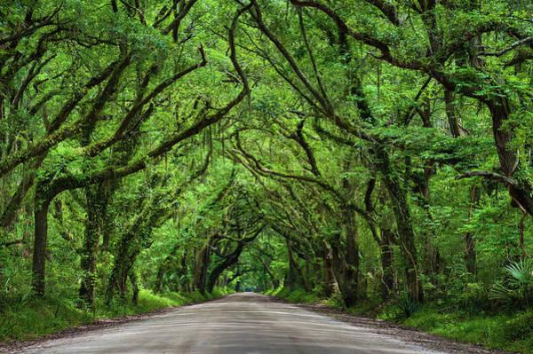 South Carolina Photograph - Botany Bay Road by Www.igorlaptev.com