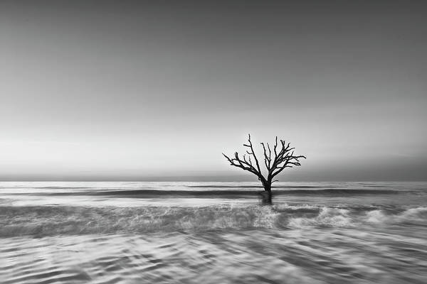 Photograph - Botany Bay Tree II by Jon Glaser