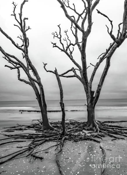 Wall Art - Photograph - Botany Bay Trifecta by Norma Brandsberg