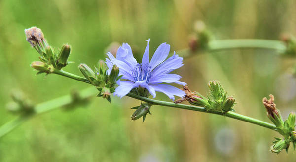 Photograph - Botany Blues by JAMART Photography