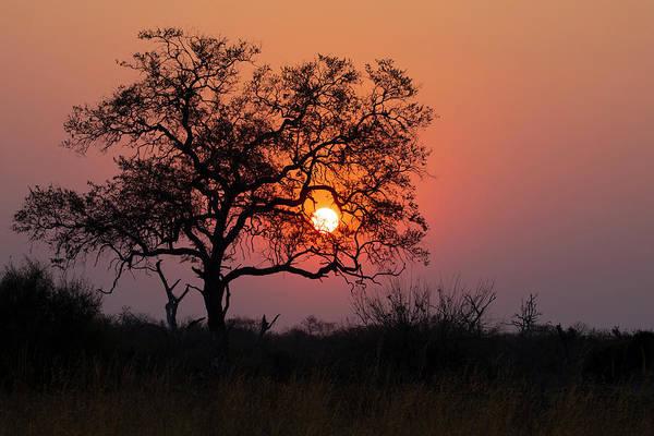 Photograph - Botswana Sunset by John Rodrigues