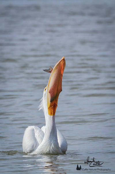 Photograph - Bottoms Up by David Cutts