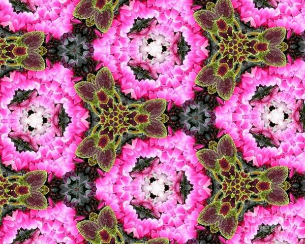 Photograph - Bougainvillea Flowers And Coleus Kaleidoscope Abstract by Rose Santuci-Sofranko