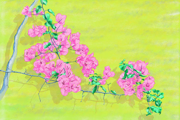 Painting - Bougainvillea On Yellow Wallwatercolor, Digital Watercolor, Digital Art, Rebelle, Tea Time, Porcelai by Xavier Francois
