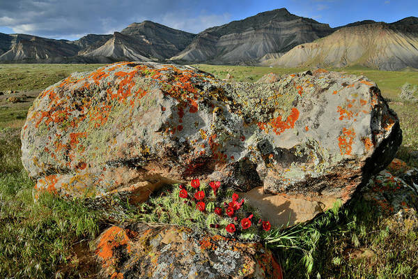 Photograph - Boulder Bloom In Book Cliffs by Ray Mathis