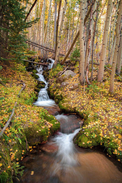 Photograph - Boulder Brook Vertical by Aaron Spong