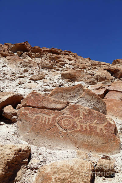 Photograph - Boulder With Petroglyphs At Ofragia Chile by James Brunker