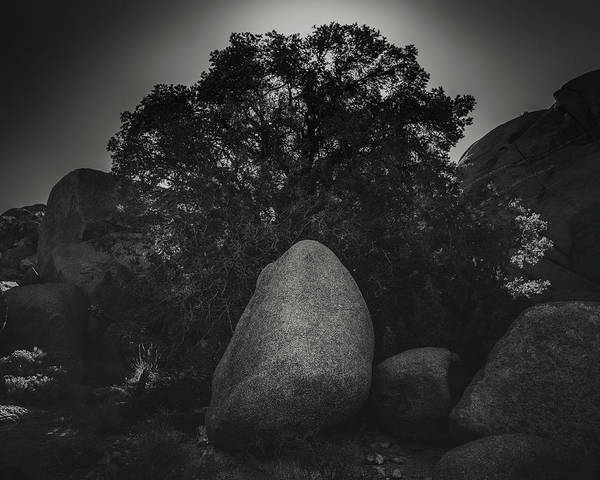 Wall Art - Photograph - Boulder With Tree by Joseph Smith