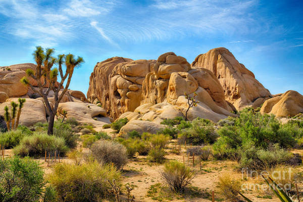 Hdr Wall Art - Photograph - Boulders And Joshua Trees In Joshua by Gary C. Tognoni