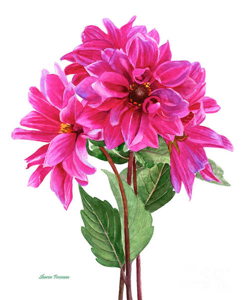 Wall Art - Painting - Bouquet Of Rose Violet Dahlias by Sharon Freeman