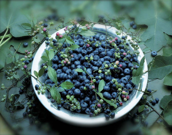 Wall Art - Photograph - Bowl Of Blueberries by Atu Images