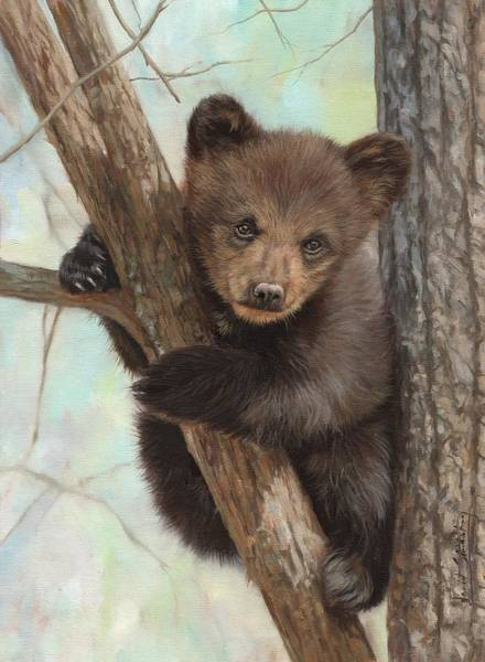 Painting - Bown Bear Cub In Tree by David Stribbling