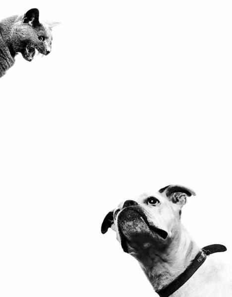 Domestic Animals Photograph - Boxer Dog Looking At Cat Above Head by Robert Daly