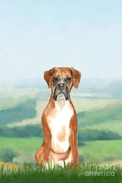 Pedigree Painting - Boxer by John Edwards