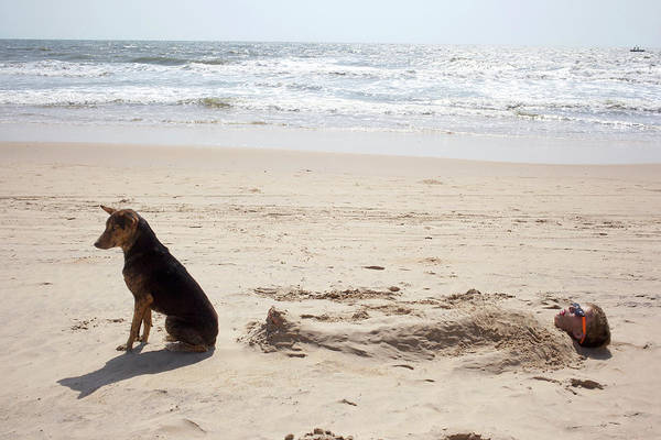 Goa Photograph - Boy Buried In Sand On Beach With Dog by Zak Kendal